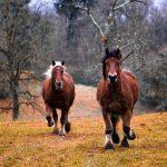 Schleich paarden en de Schleich farm world