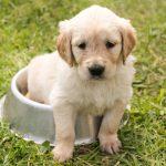 Een puppy opvoeden en verzorgen